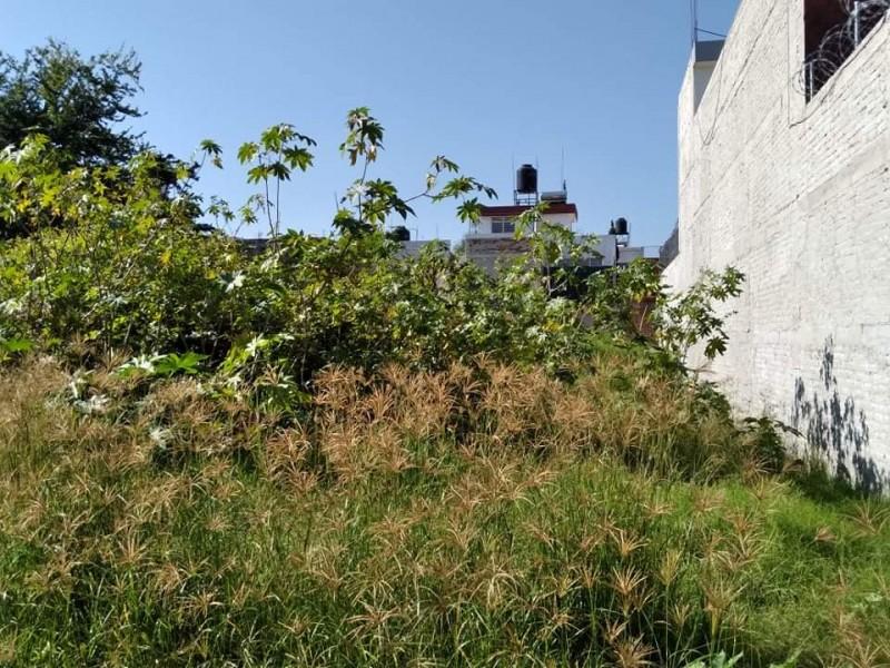 Denuncian colonos falta de limpieza en lotes baldíos en Zamora