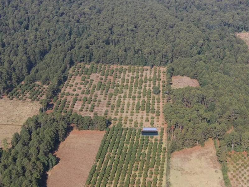 Denuncian daño a 90 hectáreas en Zirahuén