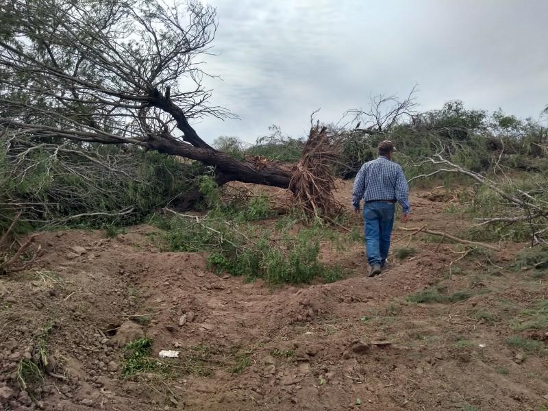 Denuncian deforestación en el Yaqui