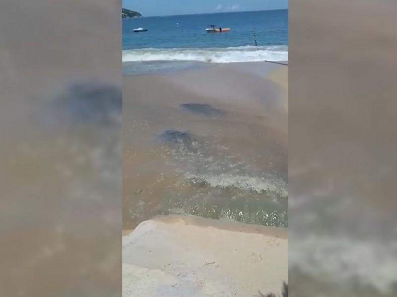Denuncian descarga de aguas negras en playa Icacos