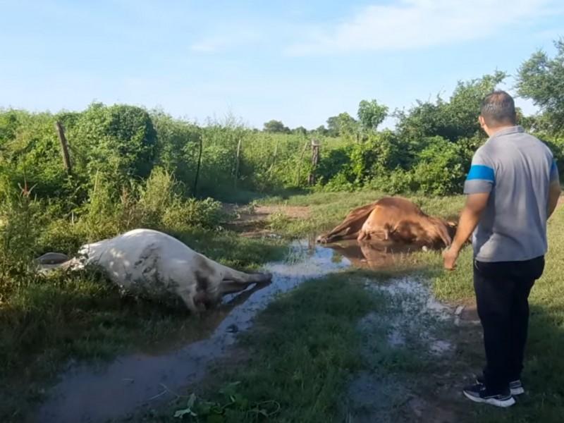 Denuncian en Tecuala envenenamiento masivo de ganado