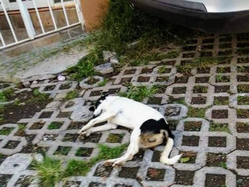 Denuncian envenenamiento de mascotas en colonia zamorana