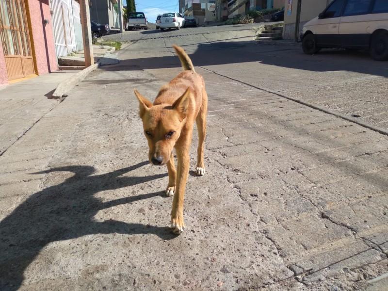 Denuncian envenenamiento de perros en la colonia CNOP