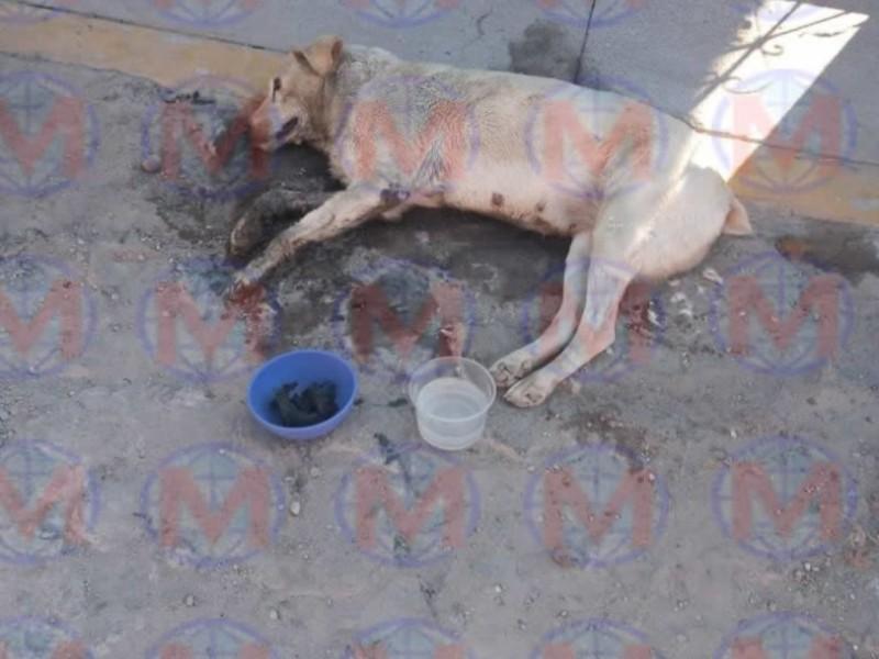 Denuncian envenenamiento de perros en Xalisco