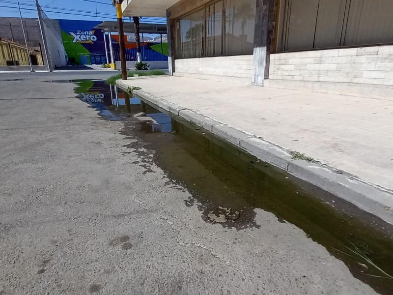 Denuncian fuga de aguas verdes en centro de Torreón