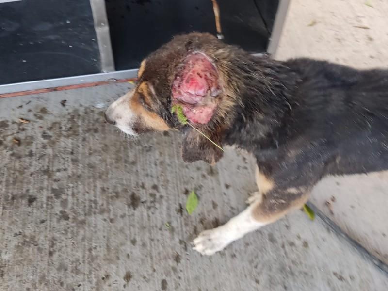 Denuncian maltrato animal en Cuayucatepec