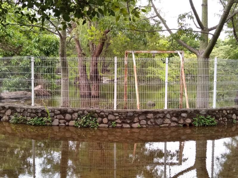 Denuncian mortandad de peces y tortugas por desbordamiento del Topocharco
