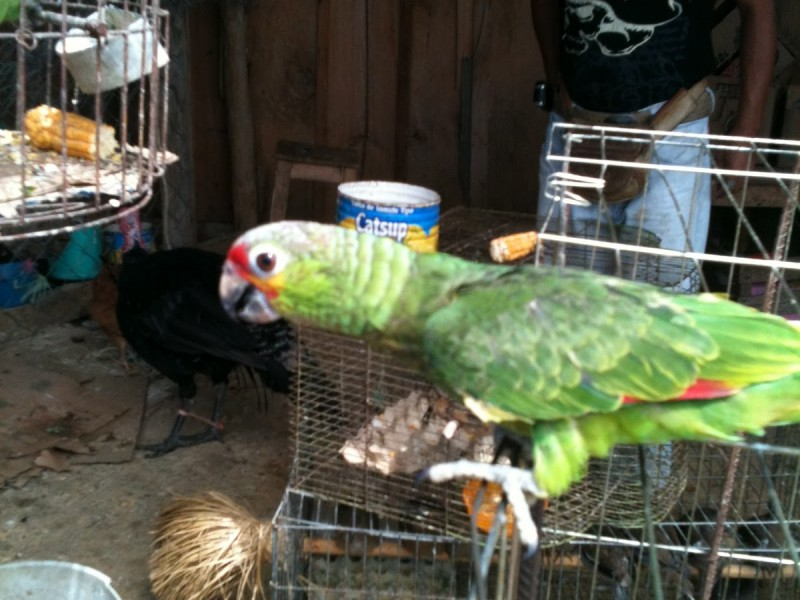 Denuncian venta ilegal de especies en Comitán