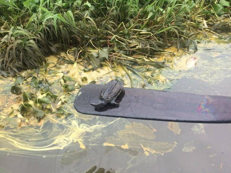 Derrame de petróleo provoca ecocidio en Nanchital
