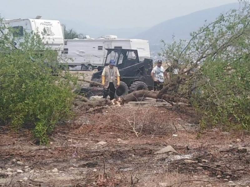 Derriban árboles para instalar circo en Tuxtla