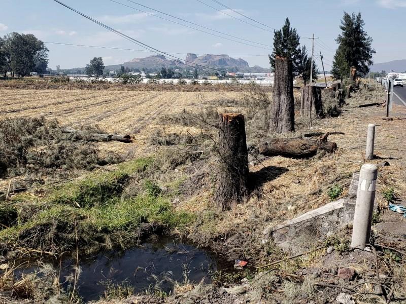 Derriban más de una decena de árboles en Zamora
