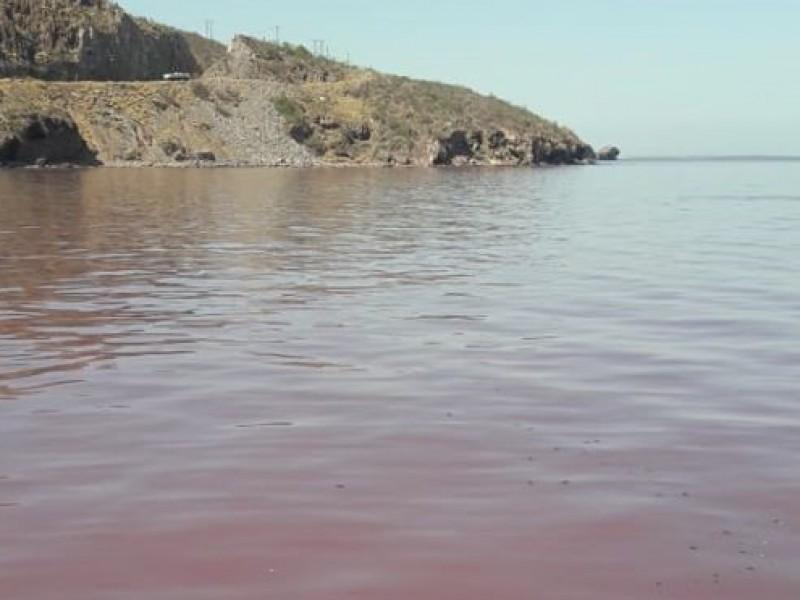 Descarta CANAINPES contaminación por la industria
