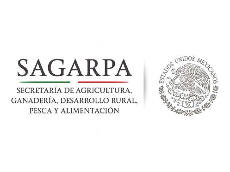 Descartan uso indebido de recursos de Sagarpa