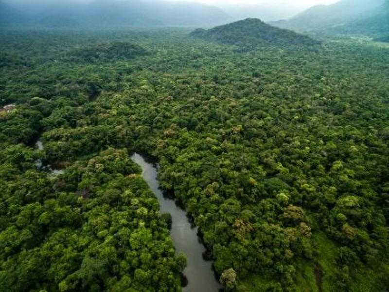 Descubren en selvas bolivianas 20 especies de flora y fauna