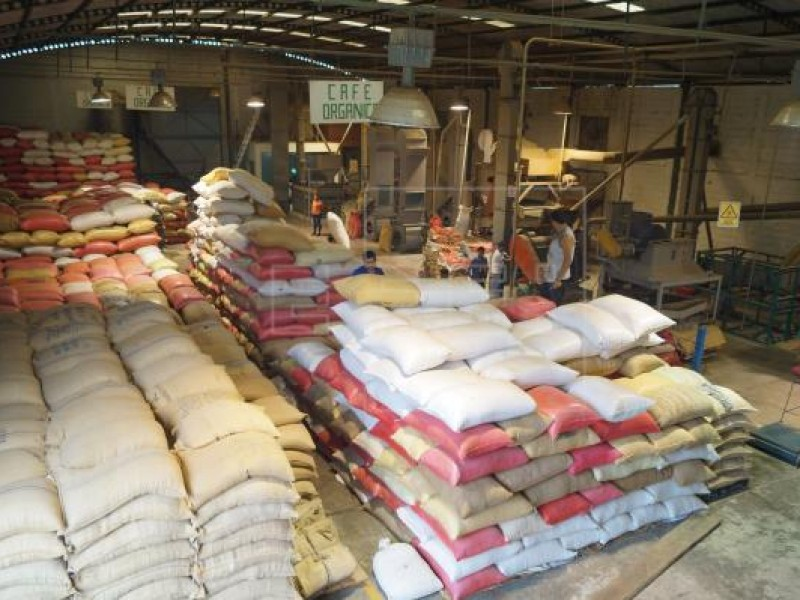 Destaca Chiapas en la producción de café en el país
