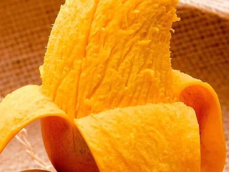 Destaca Chiapas en la producción y exportación de mango ataulfo