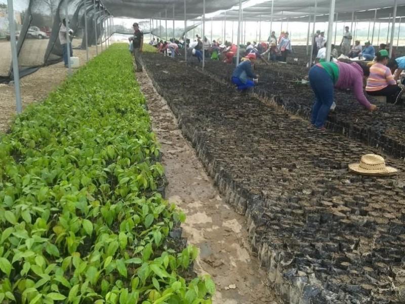 """Destinan a Oaxaca más de 120 mdp para """"Sembrando vida"""""""