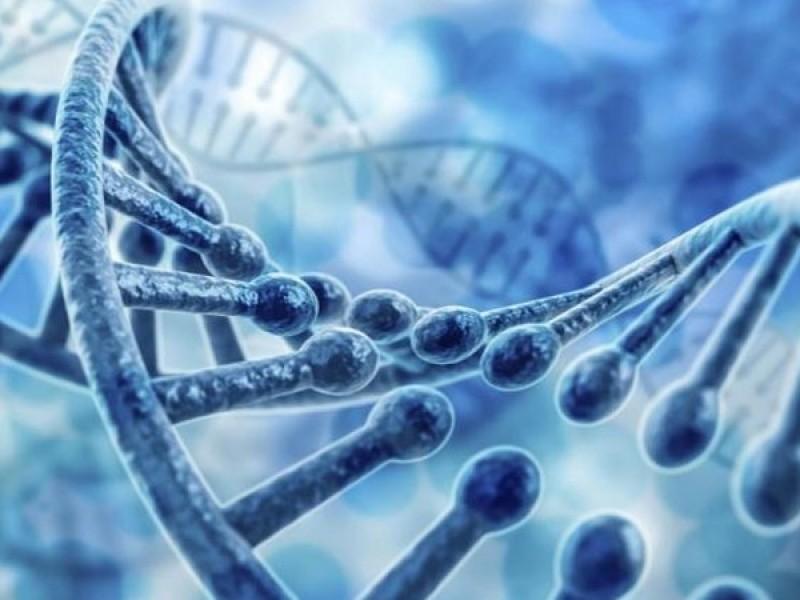 Detectan el ADN responsable de la diabetes
