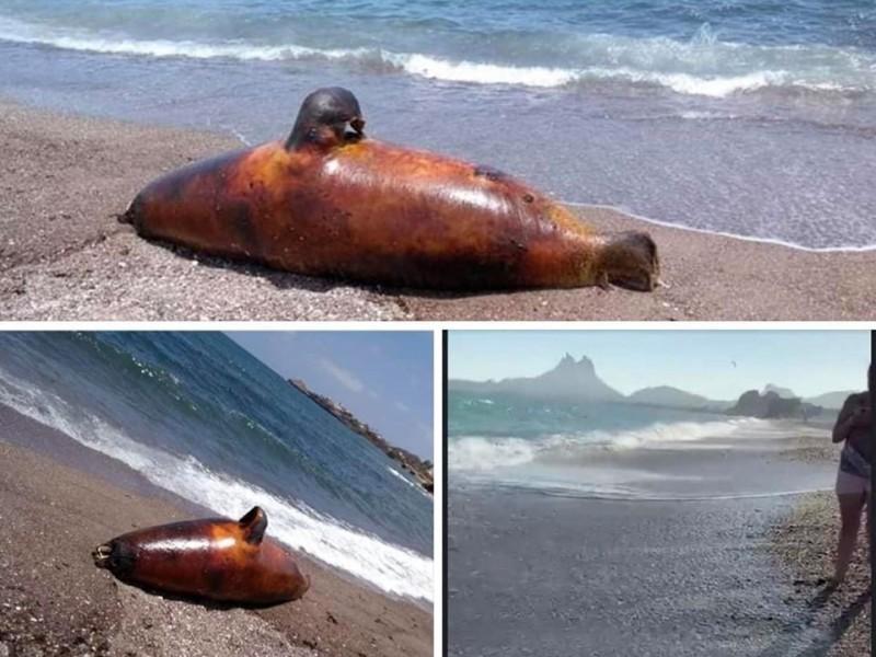 Determinan causas de muerte de especies marinas
