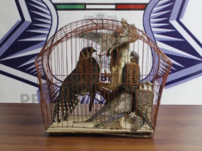 Detienen a traficante de animales mientras intentaba vender un ave