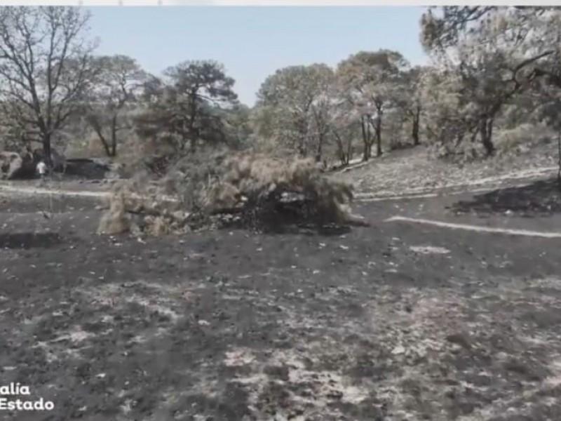 Detienen a uno por incendio forestal en La Primavera
