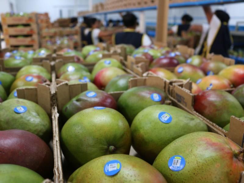 Difícil el mercado de exportaciones para Nayarit