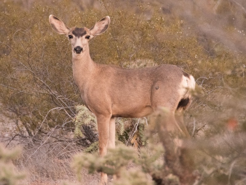 Disfrutan animales hábitat natural en San Carlos en pandemia