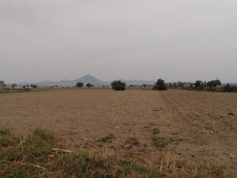 Disminuye producción de maíz por mal clima