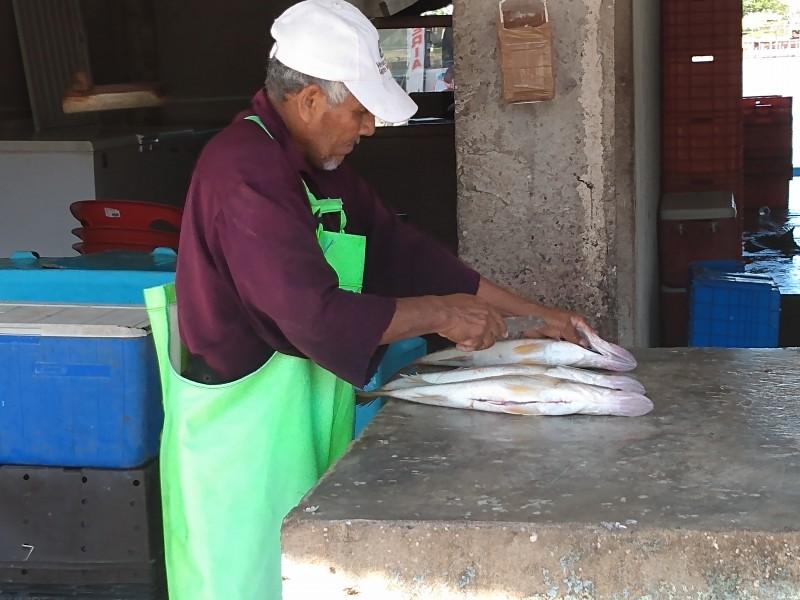 Disminuyen especies marinas en Tuxpan, por sobreexplotación pesquera