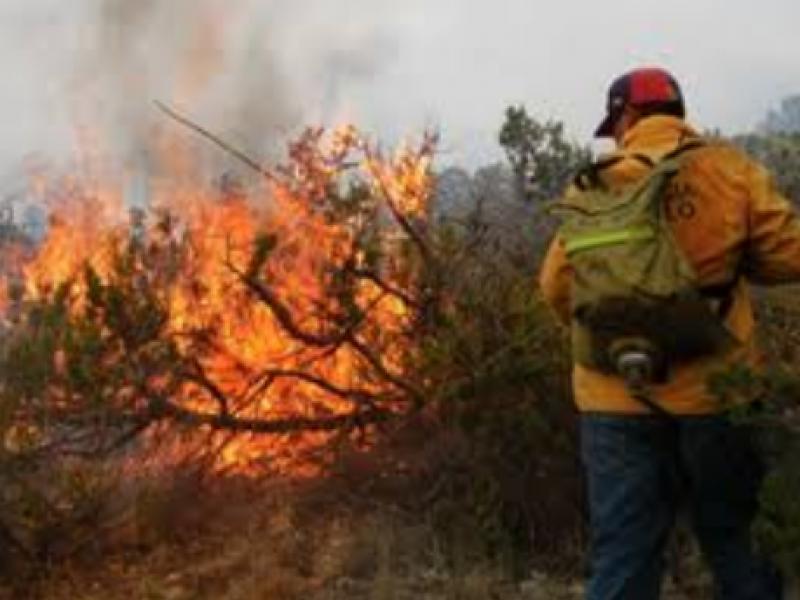 Disminuyen incendios forestales en comparación con 2019 en Chiapas