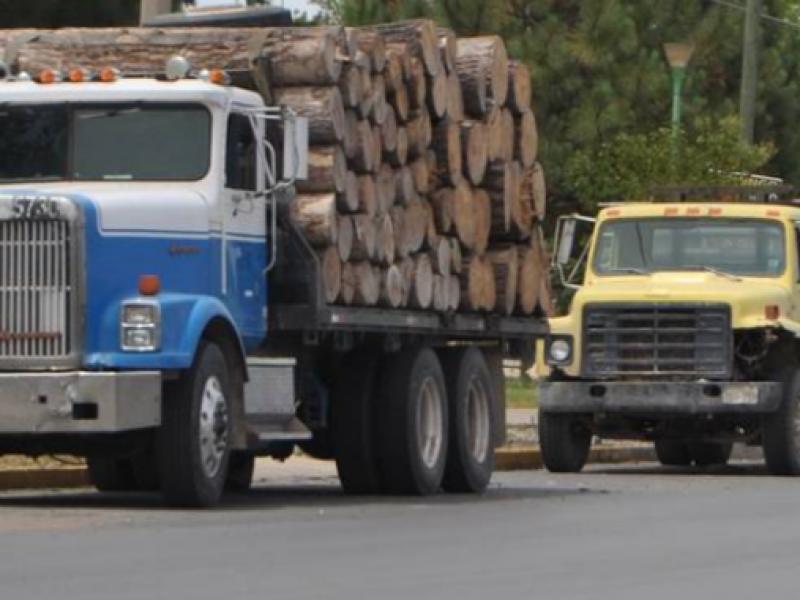 Disminuyen operativos contra la tala por COVID-19 en Chiapas