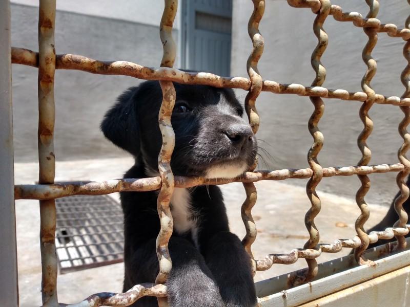Disminuyen reportes sobre maltrato animal en León en 2021