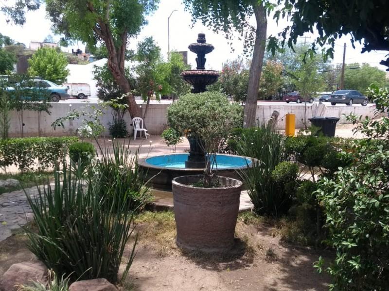 Donación de arbolillos en el vivero municipal, Nogales...