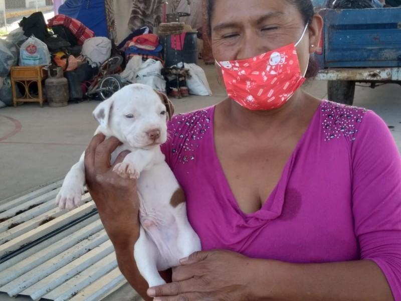 Dos familias perdieron todo y ahora cuidan a sus animales