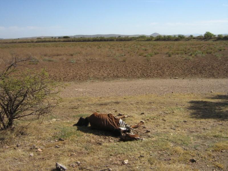 Durango solicita declaratoria de estado de emergencia por sequía