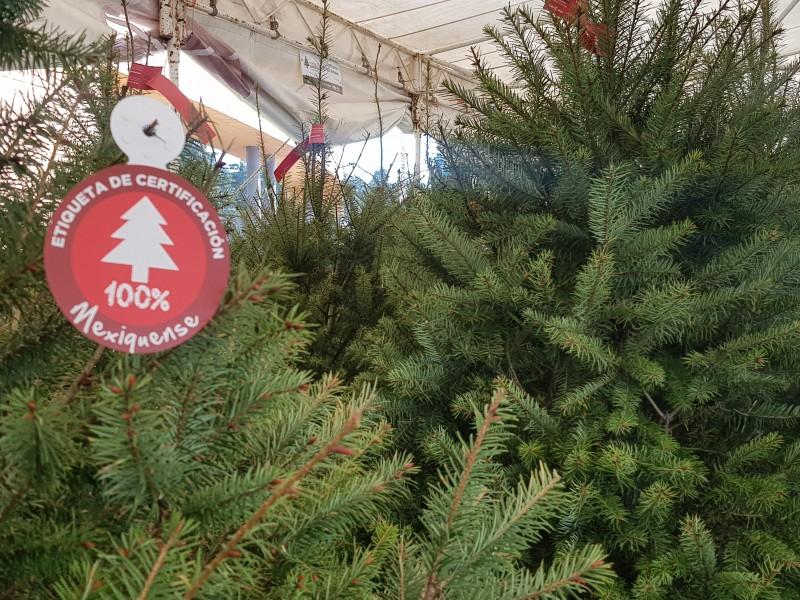 Edomex, líder en producción de árboles de navidad