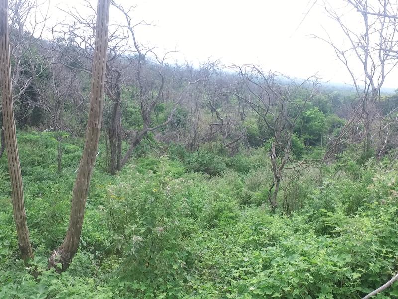 Educación ambiental, necesaria para conservación de reservas naturales