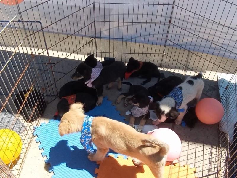 Efectúan campaña de adopción de mascotas