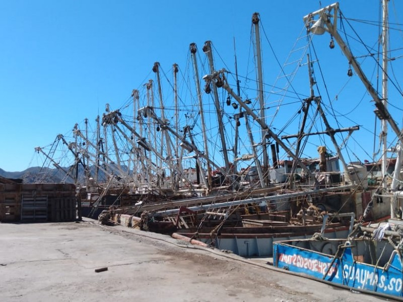 El 80% de embarcaciones amarradas en los muelles de Guaymas