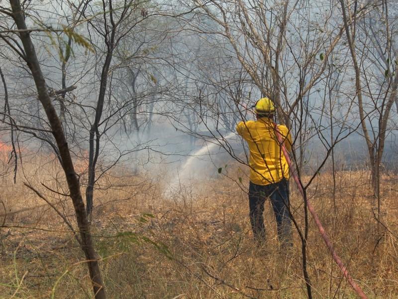 El hombre, principal responsable de incendios forestales, afirma especialista