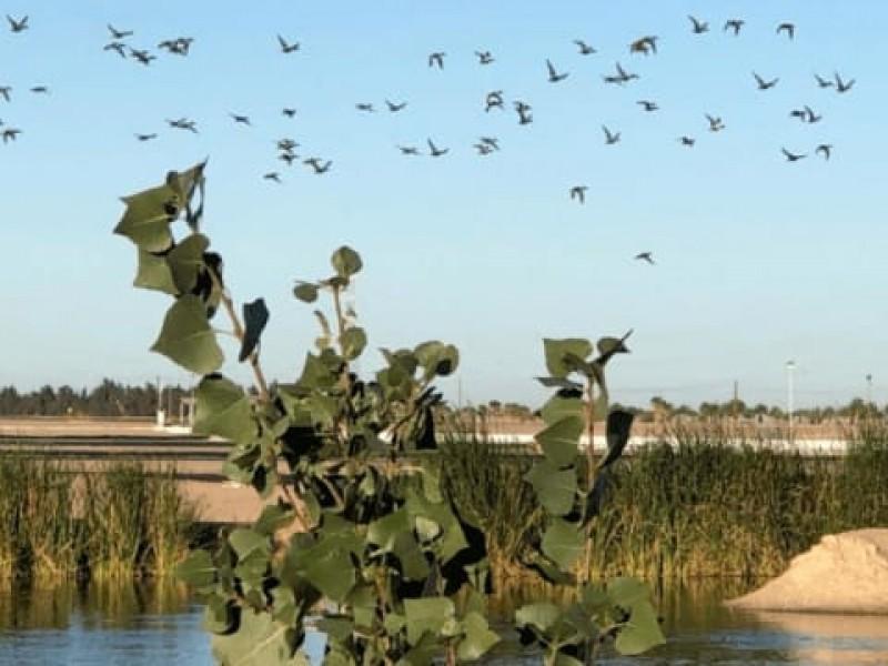 El humedal CUCAPAH de SLRC, refugio de aves