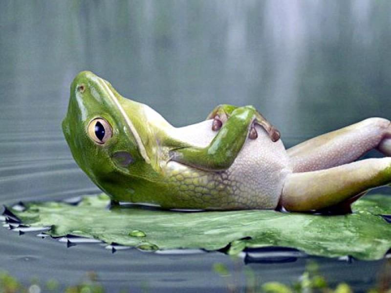 🐸El otro charco de las ranas