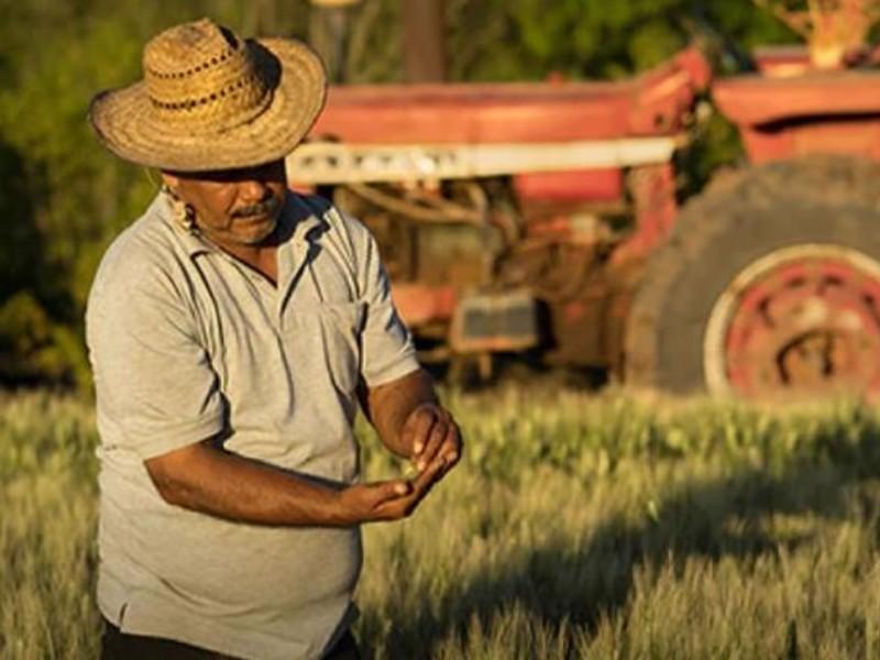 El régimen simplificado de confianza afecta al productor agrícola