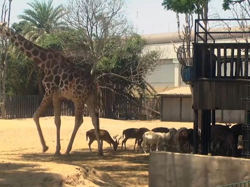 El tráfico de especies es riesgoso y un golpe ecológico