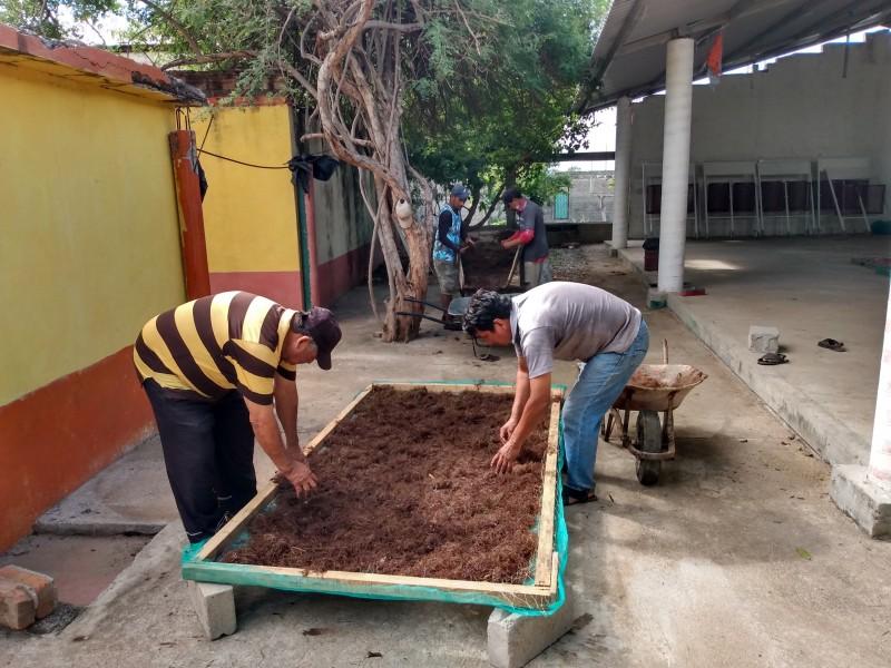 Elaboran abono con sargazo en Playa Vicente