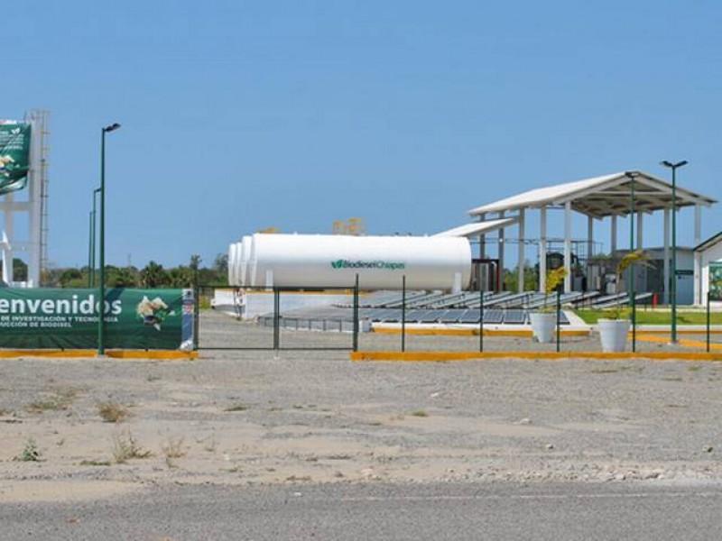 Elefante blanco planta de Biodiesel