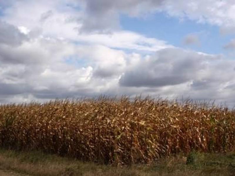 Elevados costos de producción impacta sector agrícola