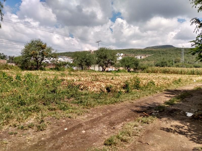 Eliminación de híbridos amenaza sector agroalimentario en México