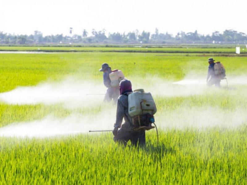 Eliminación del glifosato en campos agrícolas es por precaución