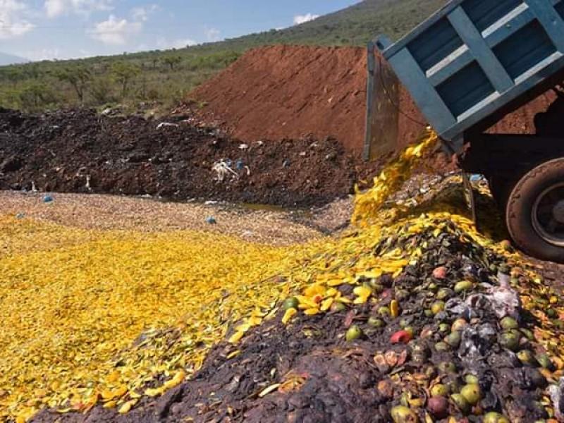 Emiten sanciones tras detectar tiraderos clandestinos de mango